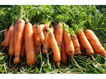 Цукаты из моркови: 3 лучших рецепта как сделать 96
